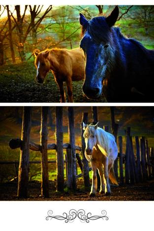 Horses at daybreak