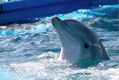 Young dolphin