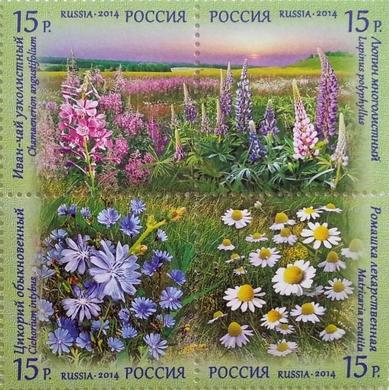 Флора России. Полевые цветы