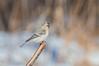 «Birds of Russia» postcard set