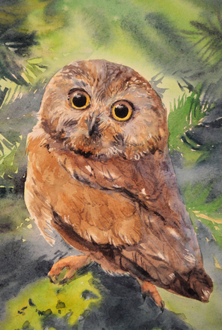 Pigly owl